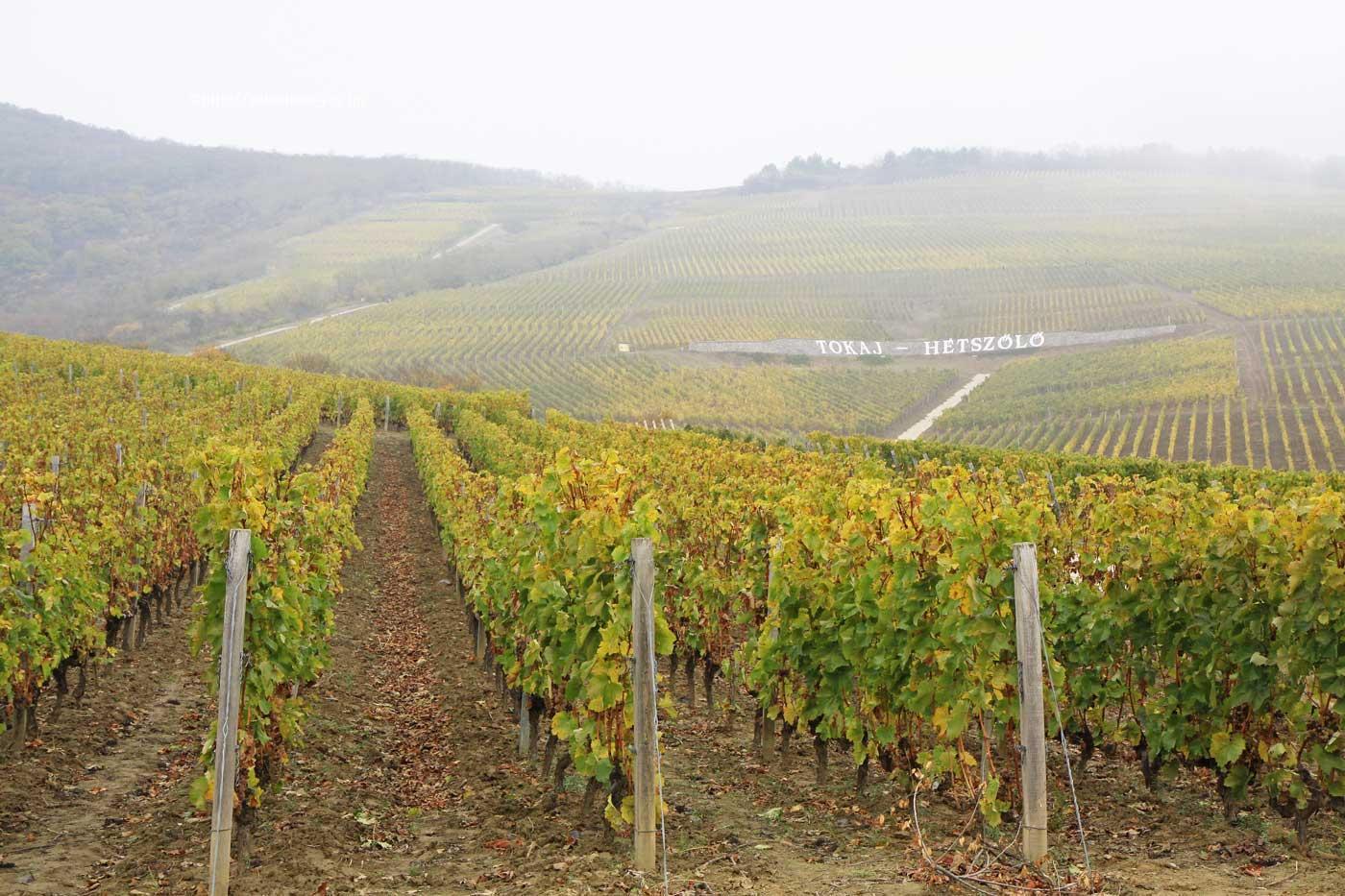 NHKラジオ第1マイあさ!9月はハンガリーの世界遺産「トカイワイン産地の歴史的文化的景観」をご紹介